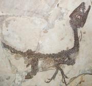 Ciro - Scipionyx Samniticus