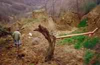 Situazione morfologica, geologica ed idrogeologica Comune di Gualdo Tadino (PG)